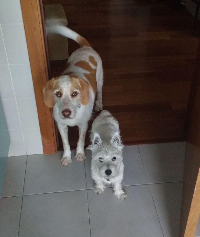 Gerbeaud and Matilda 2